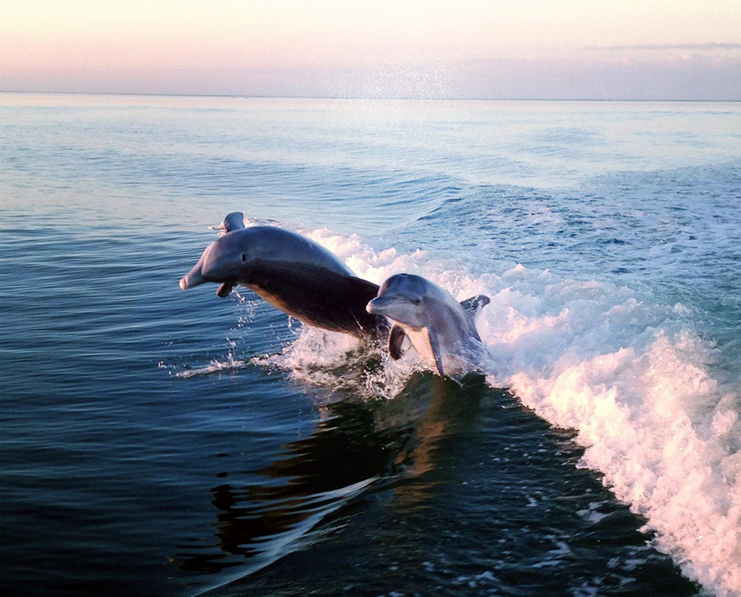 Captain Cathy Eagle Boat Tours: Dolphins & Experience Tours (image)